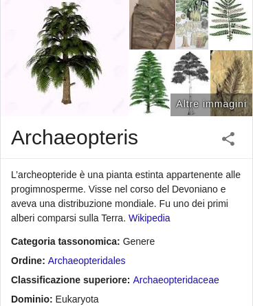 La più antica foresta fossile conosciuta al mondo